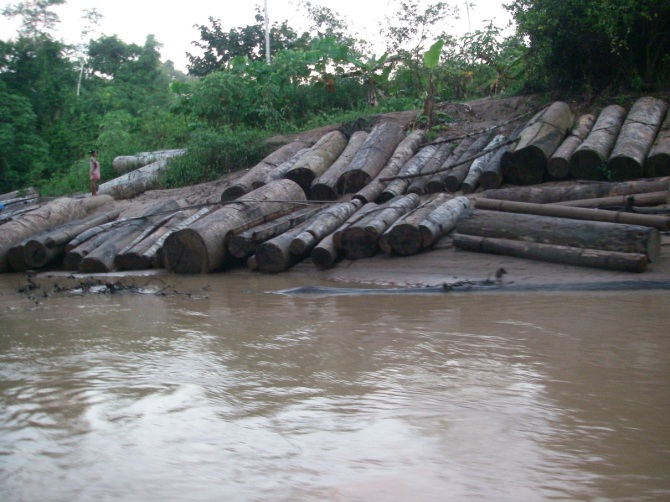 Illegal timber from Saweto / Image: UAC
